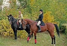 טיולי סוסים בכיף